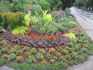 2020年7月25日 朝の富士森公園の花壇です