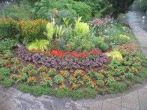 2020年7月26日 朝の富士森公園の花壇です
