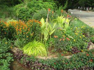 2020年8月8日 朝の富士森公園の花壇です