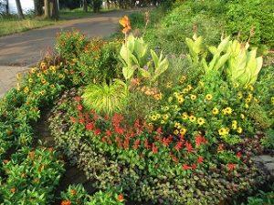 2020年8月15日 朝の富士森公園の花壇です