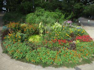 2020年8月28日 朝の富士森公園の花壇です