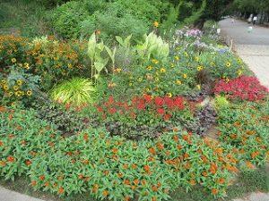 2020年8月30日 朝の富士森公園の花壇です