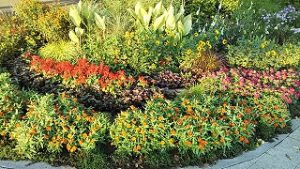 2020年9月5日 朝の富士森公園の花壇です