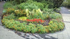 2020年9月7日 朝の富士森公園の花壇です