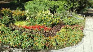2020年9月8日 朝の富士森公園の花壇です