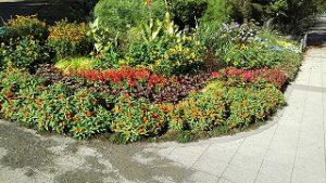 2020年9月11日 朝の富士森公園の花壇です