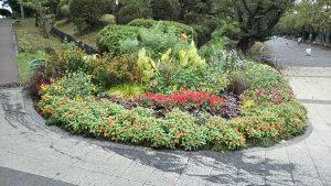 2020年9月12日 朝の富士森公園の花壇です