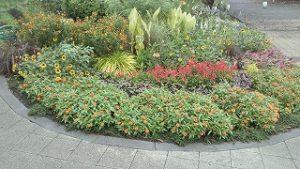 2020年9月1日 朝の富士森公園の花壇です