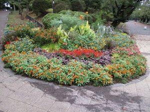 2020年9月14日 朝の富士森公園の花壇です