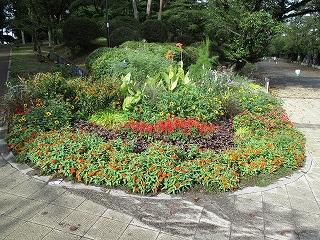 2020年9月15日 朝の富士森公園の花壇です