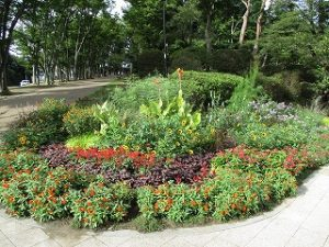 2020年9月18日 朝の富士森公園の花壇です