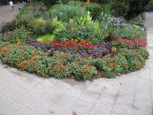 2020年9月20日 朝の富士森公園の花壇です