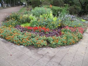 2020年9月21日 朝の富士森公園の花壇です