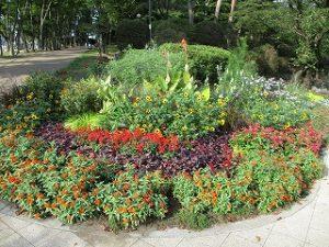 2020年9月22日 朝の富士森公園の花壇です
