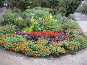 2020年9月26日 朝の富士森公園の花壇です