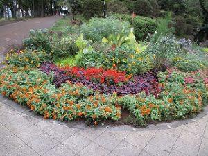 2020年9月27日 朝の富士森公園の花壇です