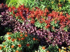 2020年9月28日 朝の富士森公園の花壇です