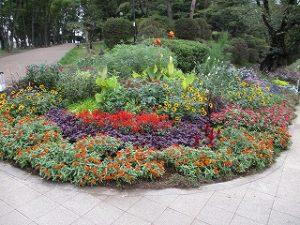 2020年10月5日 朝の富士森公園の花壇です