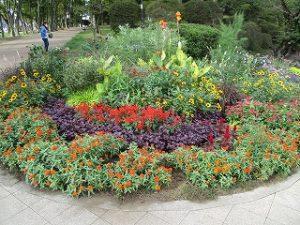 2020年10月6日 朝の富士森公園の花壇です