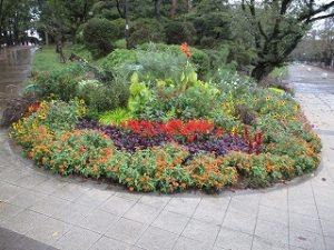 2020年10月10日 朝の富士森公園の花壇です