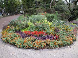 2020年10月11日 朝の富士森公園の花壇です