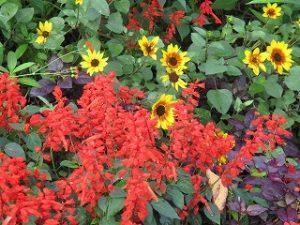2020年10月12日 朝の富士森公園の花壇です