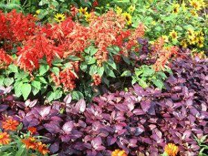 2020年10月13日 朝の富士森公園の花壇です