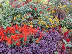 2020年10月15日 朝の富士森公園の花壇です