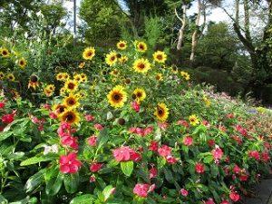 2020年10月18日 朝の富士森公園の花壇です