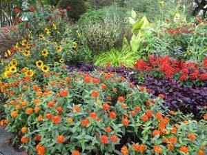 2020年10月20日 朝の富士森公園の花壇です