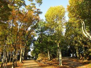 2020年10月31日 朝の富士森公園の様子です