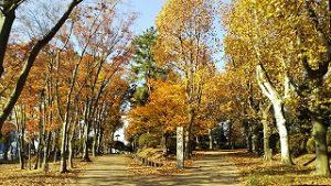 2020年11月17日 朝の富士森公園の紅葉です