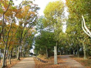 2020年11月1日 朝の富士森公園の様子です