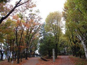 2020年11月3日 朝の富士森公園の紅葉です