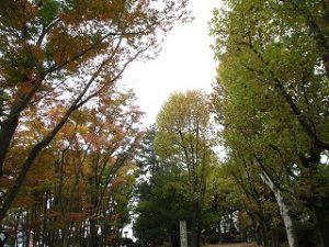 2020年11月6日 朝の富士森公園の紅葉です