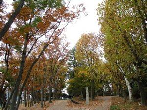 2020年11月12日 朝の富士森公園の紅葉です