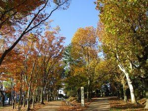 2020年11月13日 朝の富士森公園の紅葉です