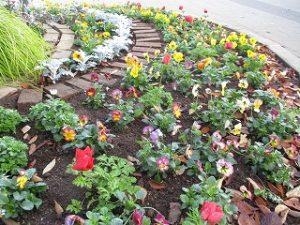 2020年11月14日 朝の富士森公園の花壇です