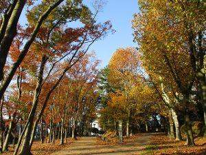 2020年11月15日 朝の富士森公園の紅葉です