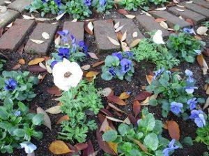 2020年11月16日 朝の富士森公園の花壇です