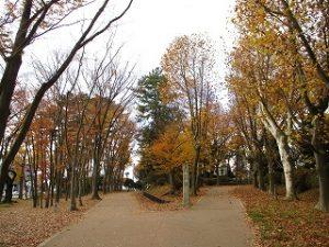 2020年11月20日 朝の富士森公園の紅葉です
