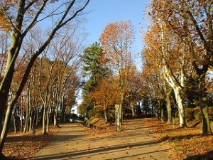 2020年11月21日 朝の富士森公園の紅葉です