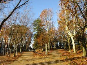 2020年11月22日 朝の富士森公園の紅葉です