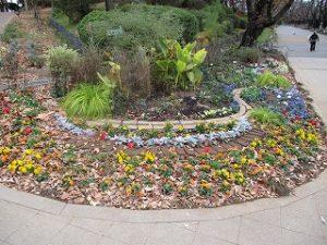 2020年11月24日 朝の富士森公園の花壇です