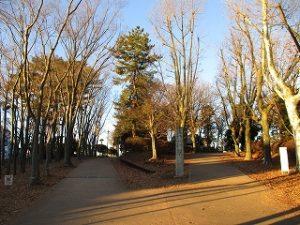 2021年1月9日 朝の富士森公園の風景です
