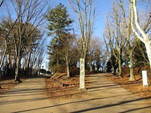 2021年1月10日 朝の富士森公園の風景です