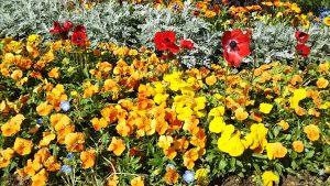 2021年4月30日 朝の富士森公園の花壇です