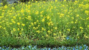 2021年4月2日 富士森公園の花壇です
