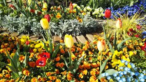 2021年4月11日 朝の富士森公園の花壇です