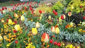 2021年4月13日 朝の富士森公園の花壇です